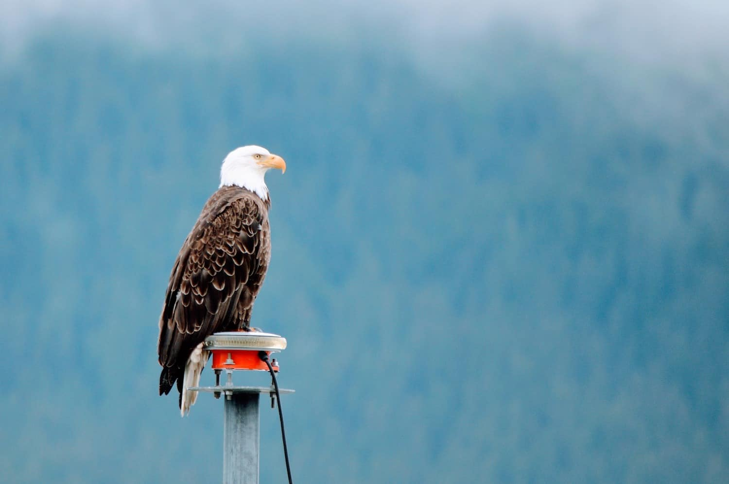 Skagway Cruise Excursions - Eagle Float