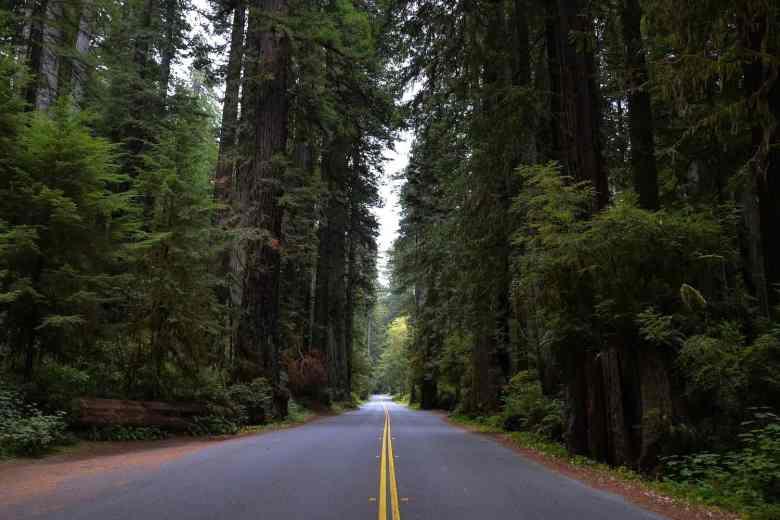 Redwoods Road Trip - Giant Sequoias