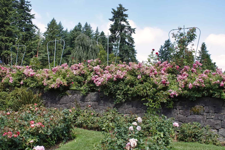3 Days in Portland - Rose Garden