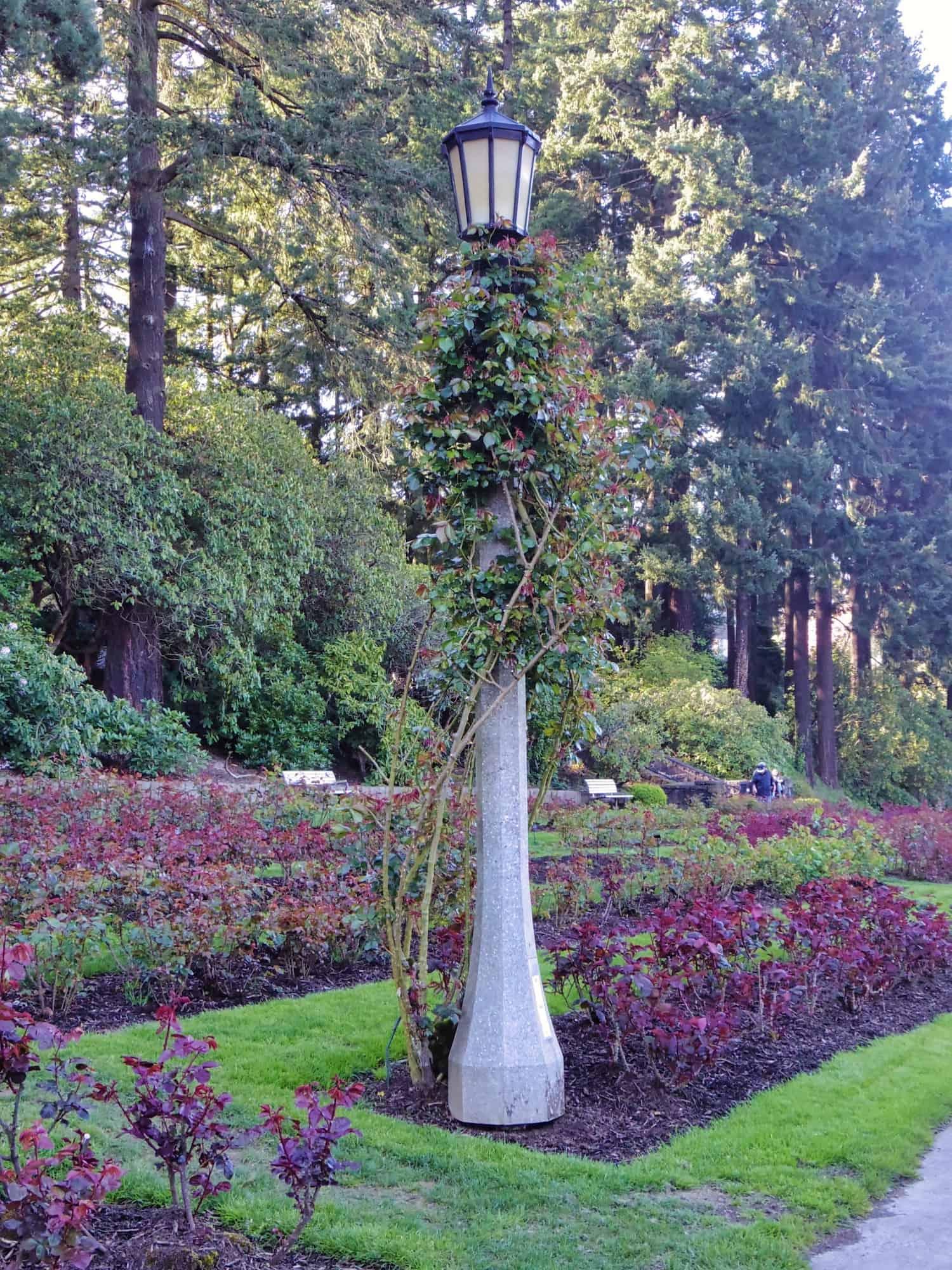 Portland Weekend Trip - Rose Garden