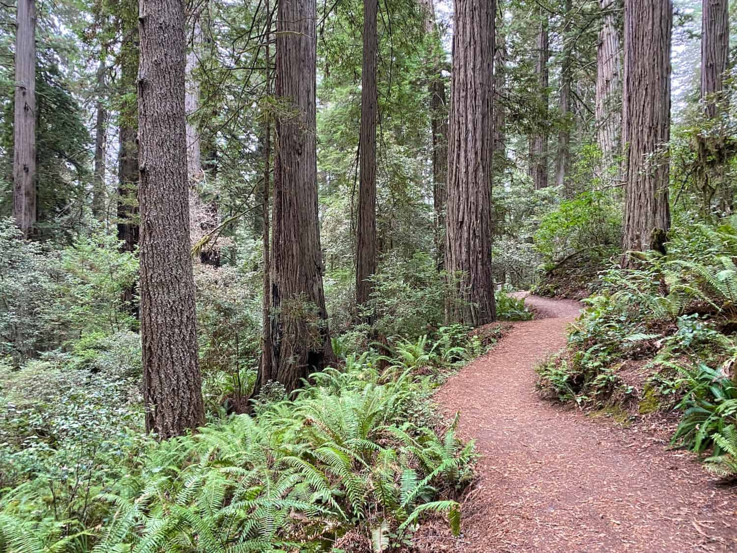 3 Days in Crescent City - Redwoods Hiking