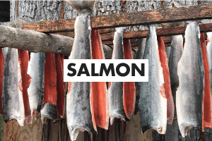 Salmon Definition Card