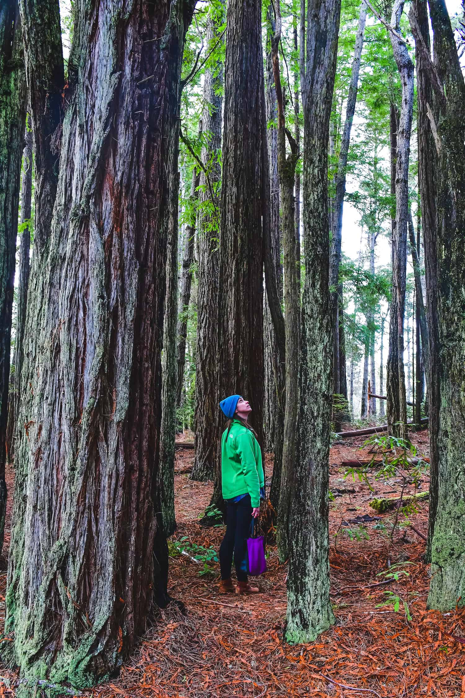 Things to Do in Fort Bragg - Jug Handle State Reserve