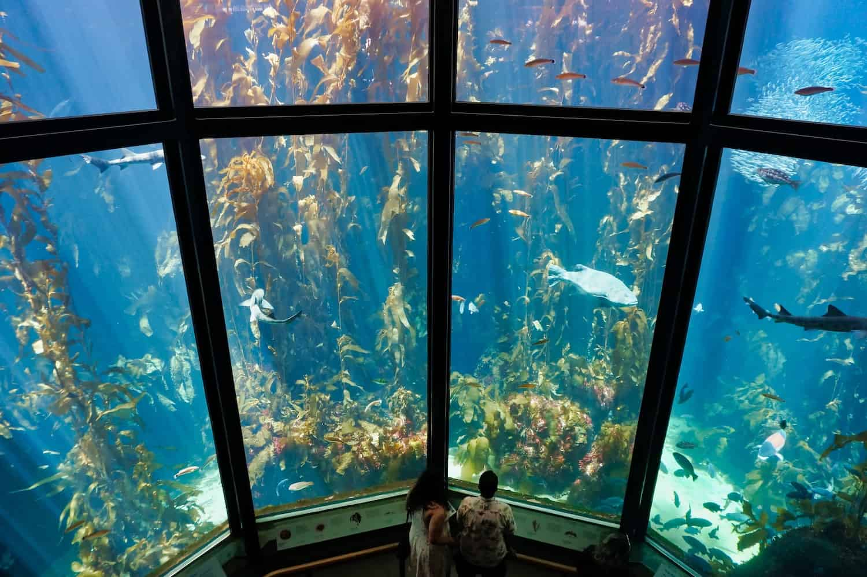 One of the tanks at Monterey Bay Aquarium