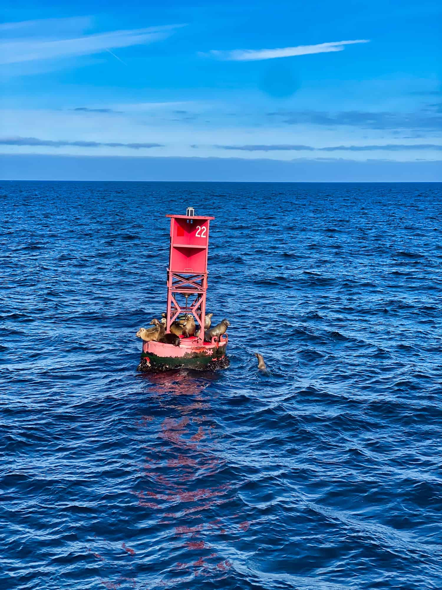 Sea Lions on a Buoy in Monterey