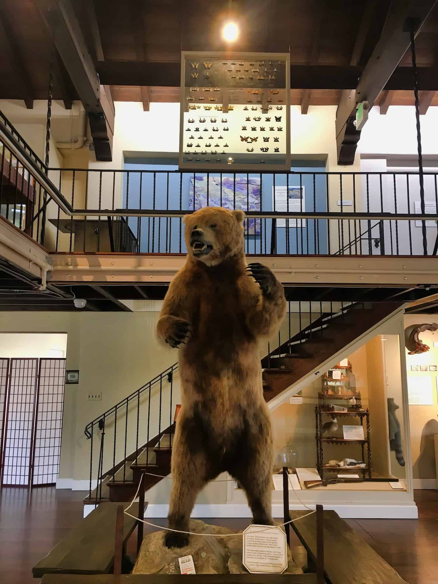 Inside the Pacific Grove Museum of Natural History