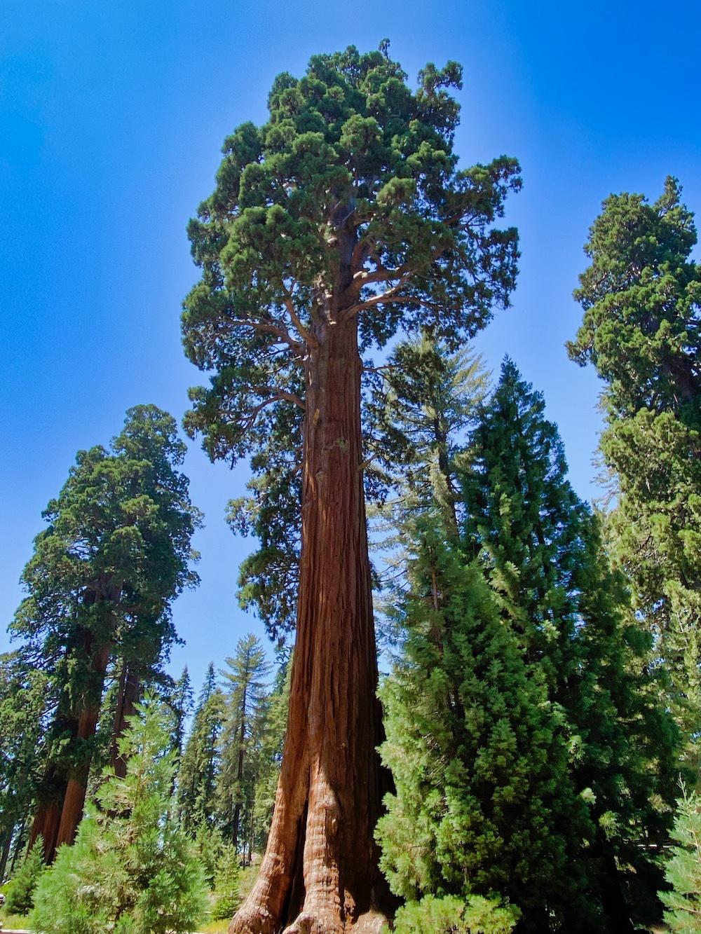 Sequoia National Park - General Sherman Tree 2