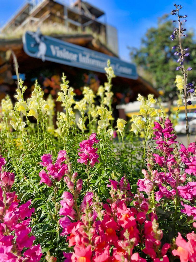John Hall's Alaska Review - Day 8 - Exploring Anchorage