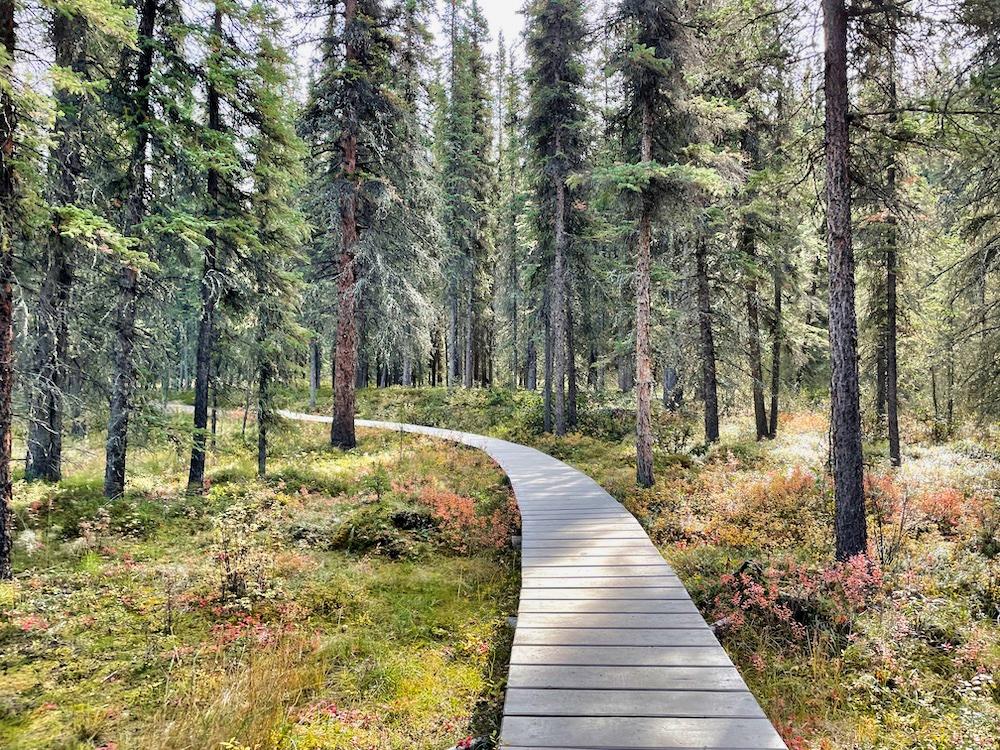 Denali National Park Itinerary - Hiking Horseshoe Lake