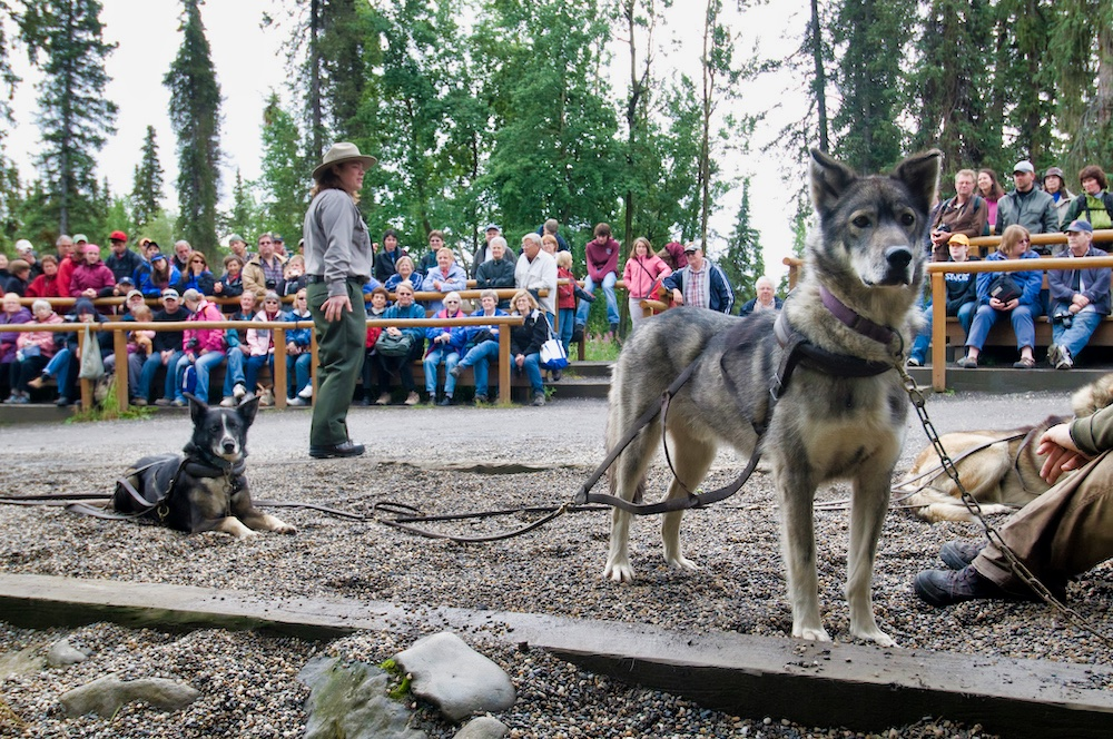 Denali National Park Itinerary - Sled Dogs - NPS Photo by Kent Miller