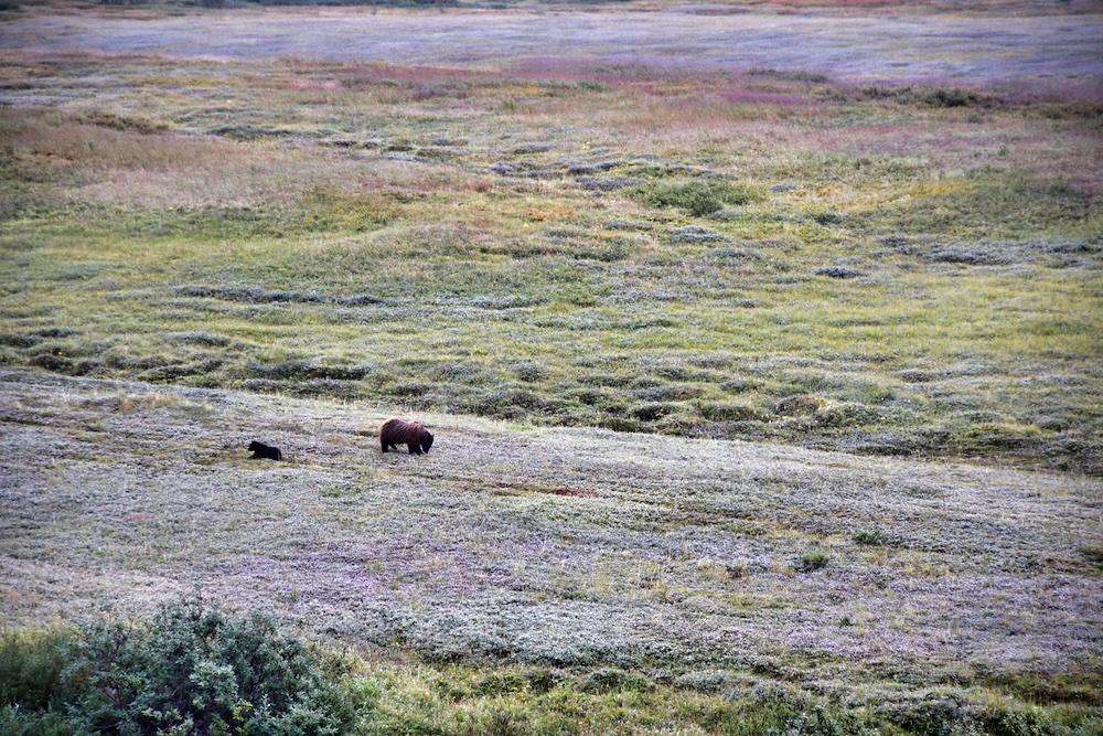 Denali National Park Itinerary - Tundra Wilderness Tour