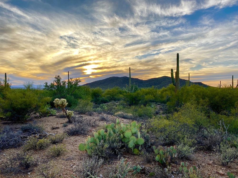 Saguaro National Park Itinerary - Types of Cacti