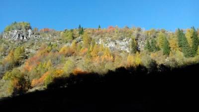 Chardonney Wood