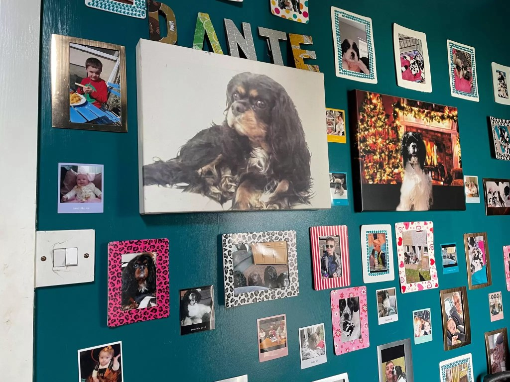 A wall of rememberance for Dante the dog