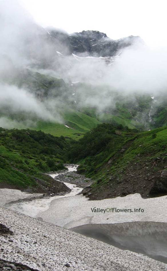 Picture of Valley of flowers in Mid July 2007,