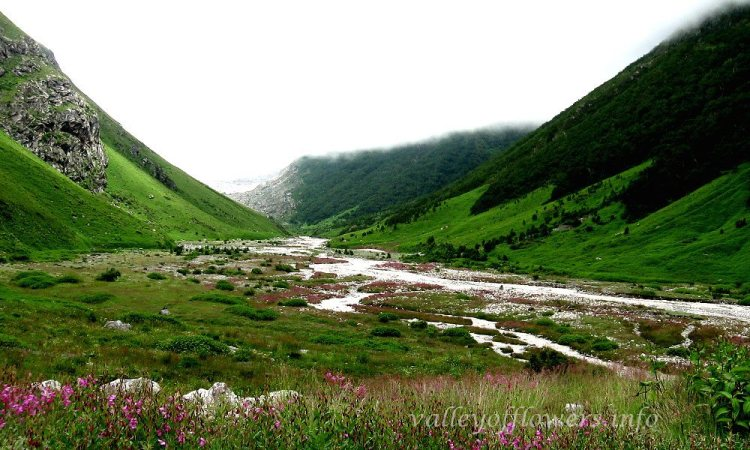 Pushpawati river bed is 6 kilometers in the Valley of Flowers. You can see the pink shade on the river bed . This pink shade is due to a colony of a beautiful flower Epilobium Latifolium or we can call it River Beauty also.