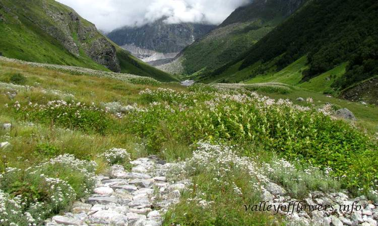 Trek near the Pushpawati river bed. This is 6 km inside the valley of flowers.