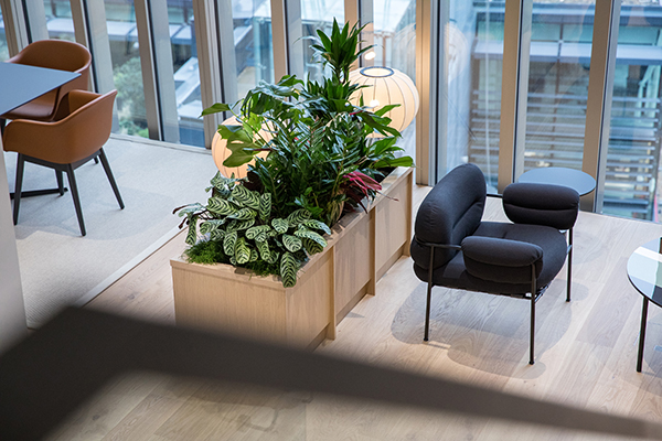 Office Plants affect Staff in London | Valley Provincial, Corporate Plants and Flowers