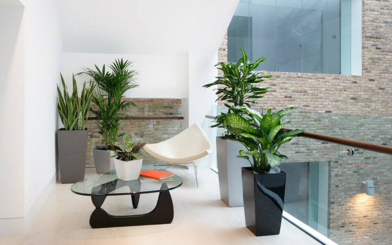 How Office Plants can help as we return to the Workplace