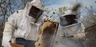 apicultores-abejas