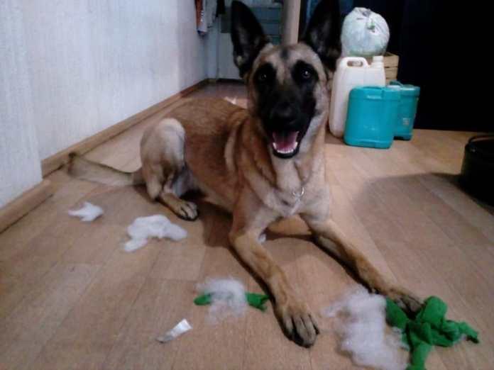 purina-cuidará-mascotas-de-personal-médico
