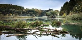 el-medio-ambiente-luego-del-covid19