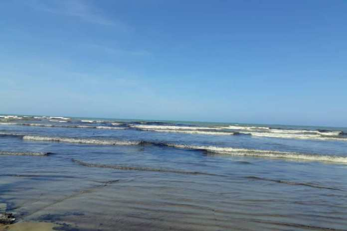 Derrame petrolero en Venezuela impacta en la flora y fauna marina