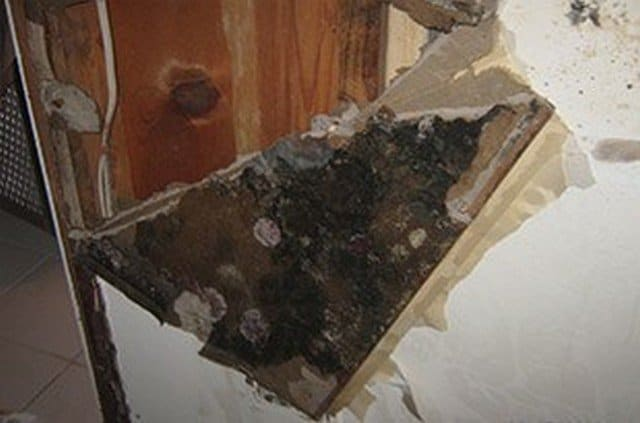 Top 40 Articles On Mold & Indoor Air Quality!: Links to 40 articles on mold facts, black mold, mold and health, water damage and mold, mold prevention and mold removal!