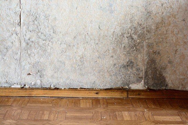 Basement Mold Prevention: 10 Tips | Washington DC | Valor Mold