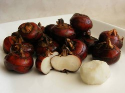 chinese water chestnut