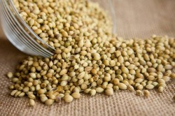 Coriander seeds benefits