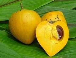 cut canistel fruit