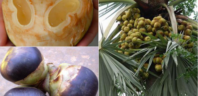 Health Benefits of Palmyra fruit / Palm Fruit / Ice Apple