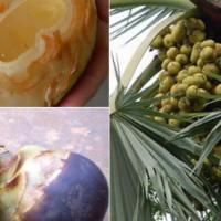 Health Benefits of Palmyra fruit / Palm Fruit / Ice Apple