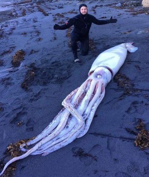 Huge Squid