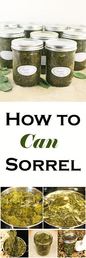 How to Can Sorrel