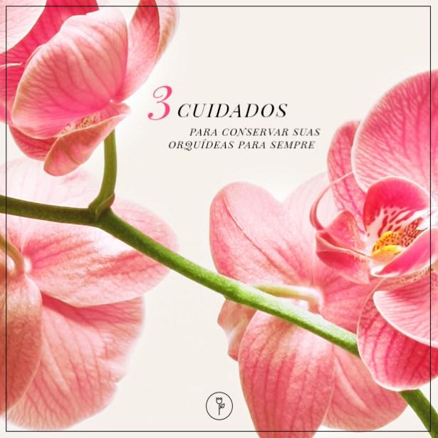 post orquideas - banner 0