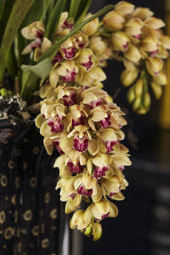 arranjo com orquídeas cymbidium