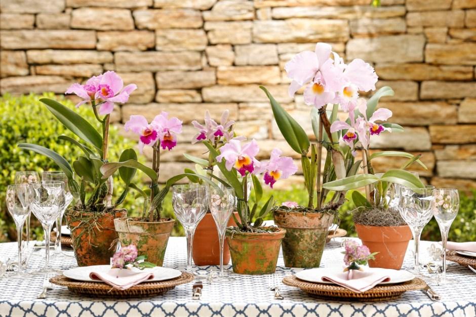 orquideaa em vasos de barro com musgo