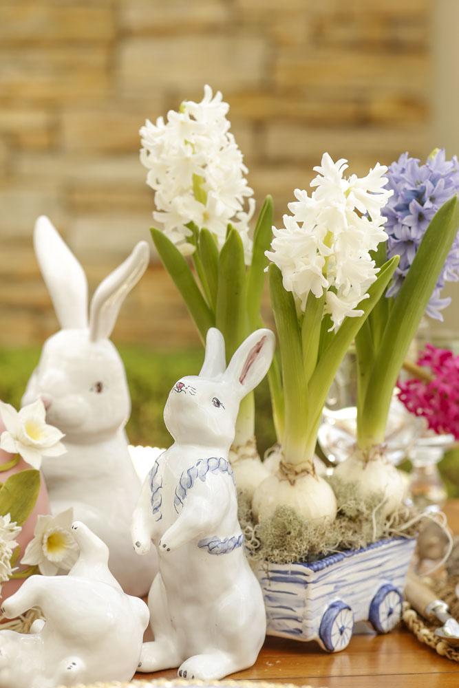 hyacinthus em carrocinha de coelho couvert
