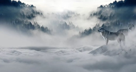 Lobos na neblina