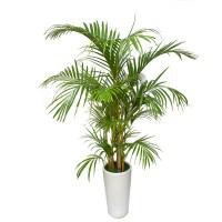 Top 5 luchtzuiverende planten voor in je slaapkamer die je helpen ...