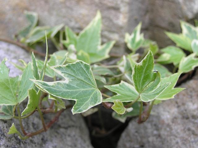 Zuiverende Planten Slaapkamer : Top luchtzuiverende planten voor in je slaapkamer die je helpen