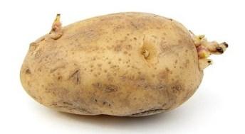 aardappel met uitlopers