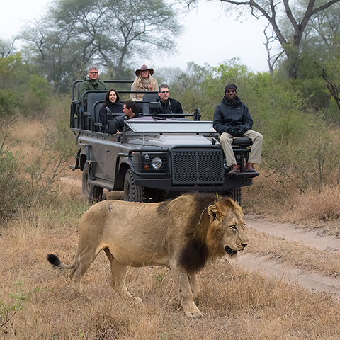 The best safari experience