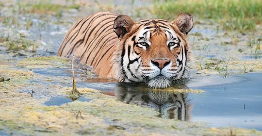 Rondreis Zuid Afrika - Tiger Canyons