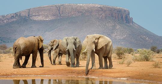 Rondreis Zuid Afrika - Waterberg