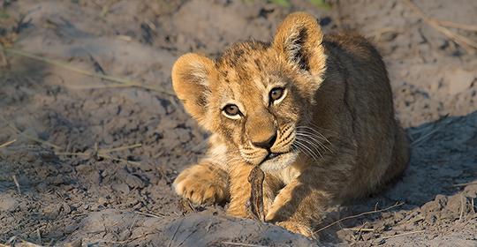 Rondreis Zuid Afrika - Kruger Park