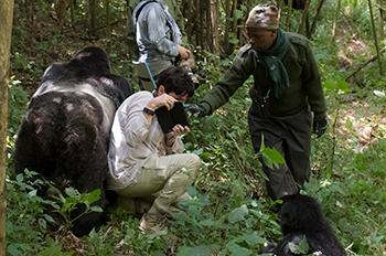 Rondreis Oeganda - gorilla