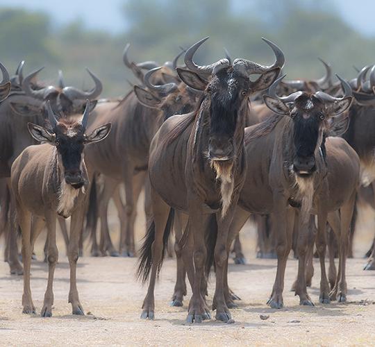 Tanzania safari- fotografie